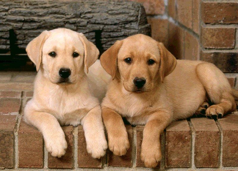 Approvata la commestibilità e il commercio della carne di cane