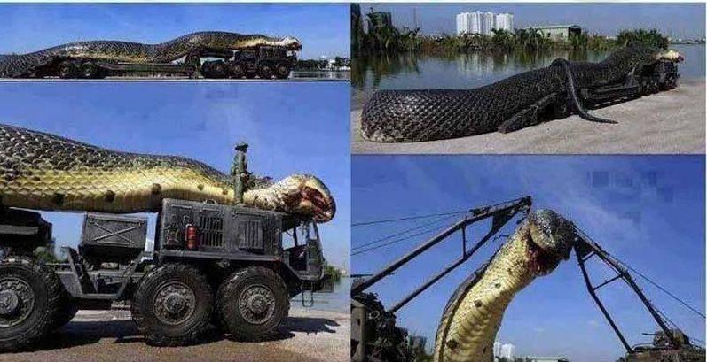 Catturata l'anaconda più grande del mondo