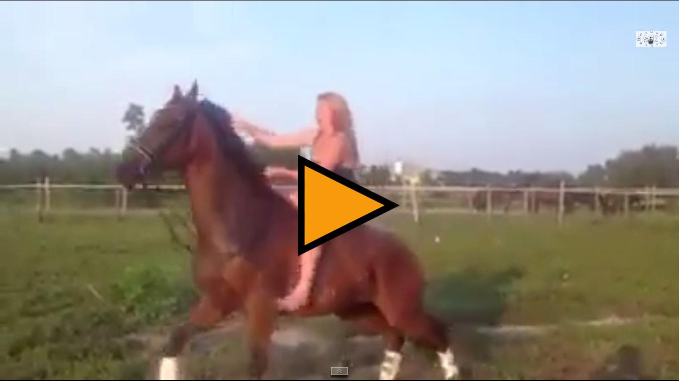 L'Ice Bucket Challenge in groppa a un cavallo non è una buona idea – VIDEO